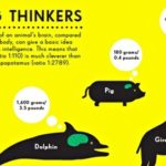 Brain size infographic